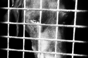 The No-Kill Epidemic: Is our cause really helping?