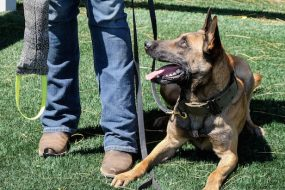 Water Your Grass: Finding Motivation and Training Your Dog