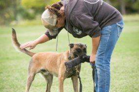 Reward it Right: Assessing Your Dog's Wants for a Conflict Free Out