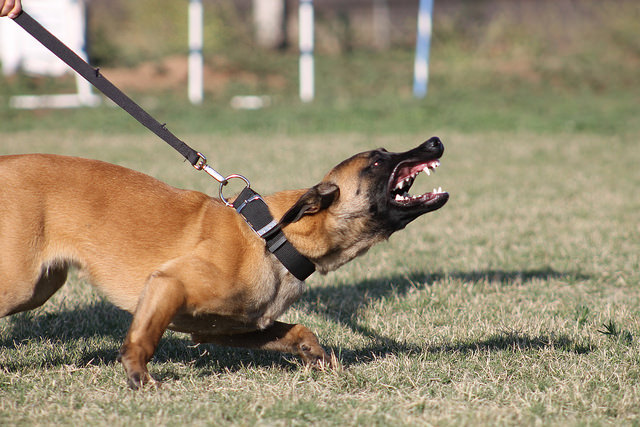 The Loadout Room: Life Lessons Learned From An Attack Dog