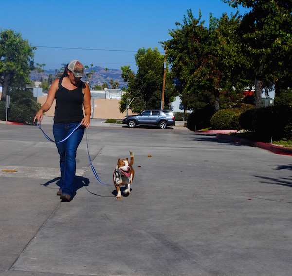 Cut Him Some Slack: The Psychology Behind Bad Leash Manners