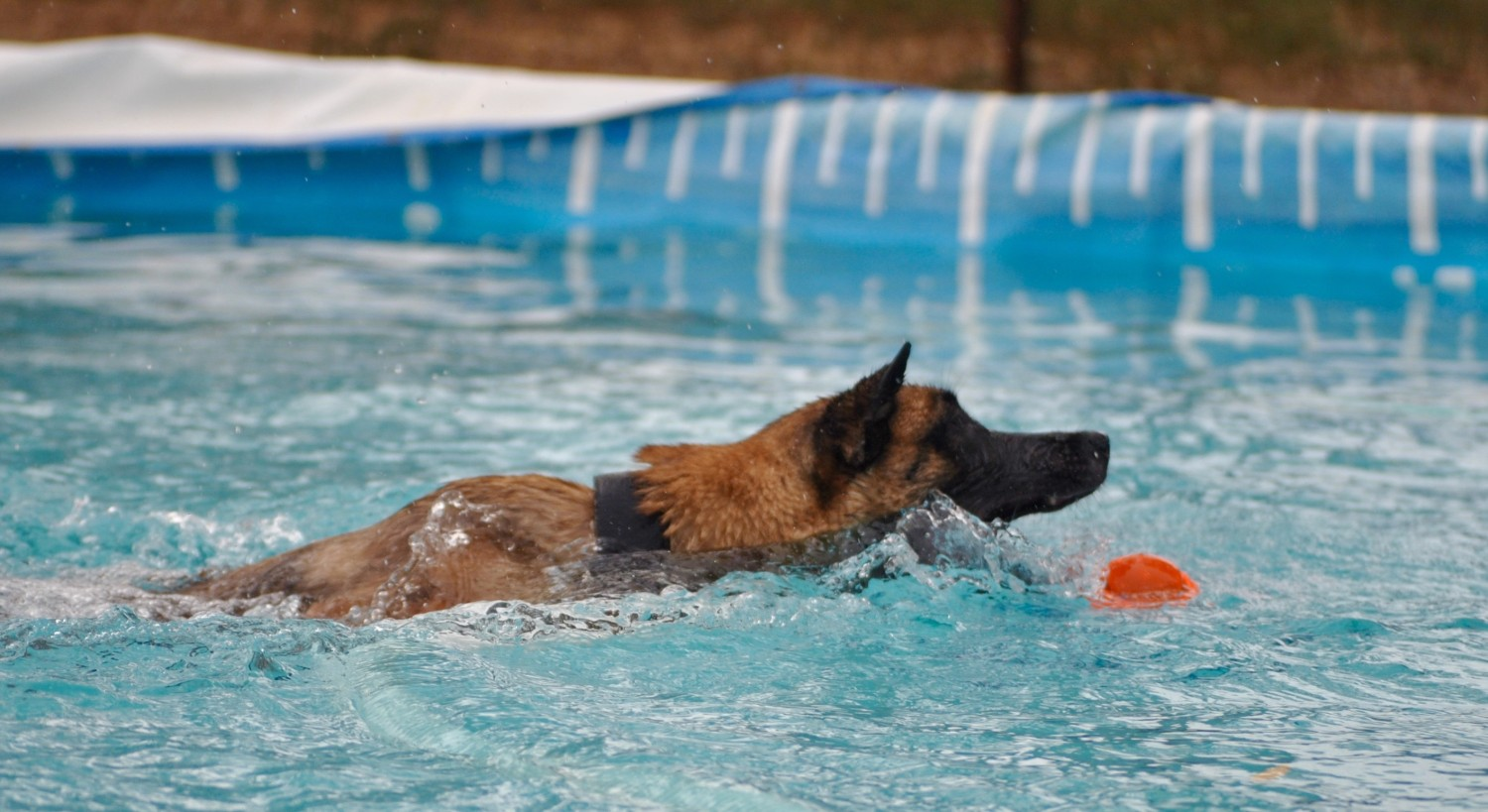 Safe to Swim Another Day – Water Safety for the Working Dog