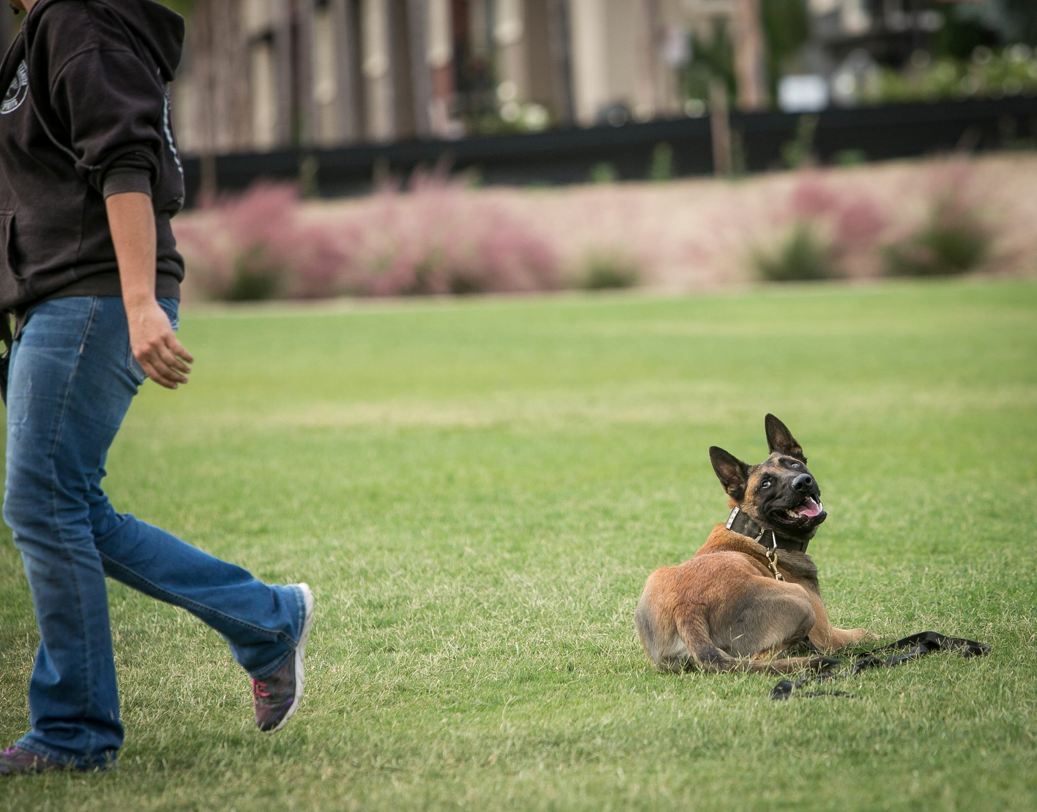 Got Focus? Setting Expectations and Winning Your Dog's Attention