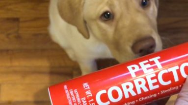 Hand holds up Pet Corrector can with yellow lab puppy in the background.