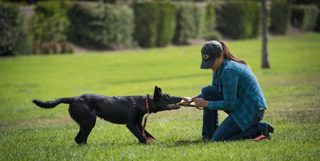 Dog trainer, Meagan Karnes plays tug with black dog in grass.