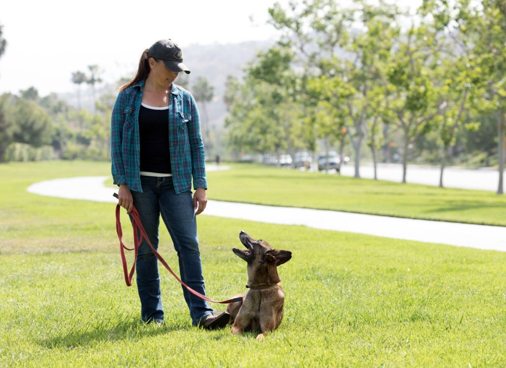 Dog trainer, Meagan Karnes stands next to leashed Malinois that is laying in grass.