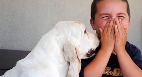 Kids and Dogs: Are we REALLY setting the stage for success?