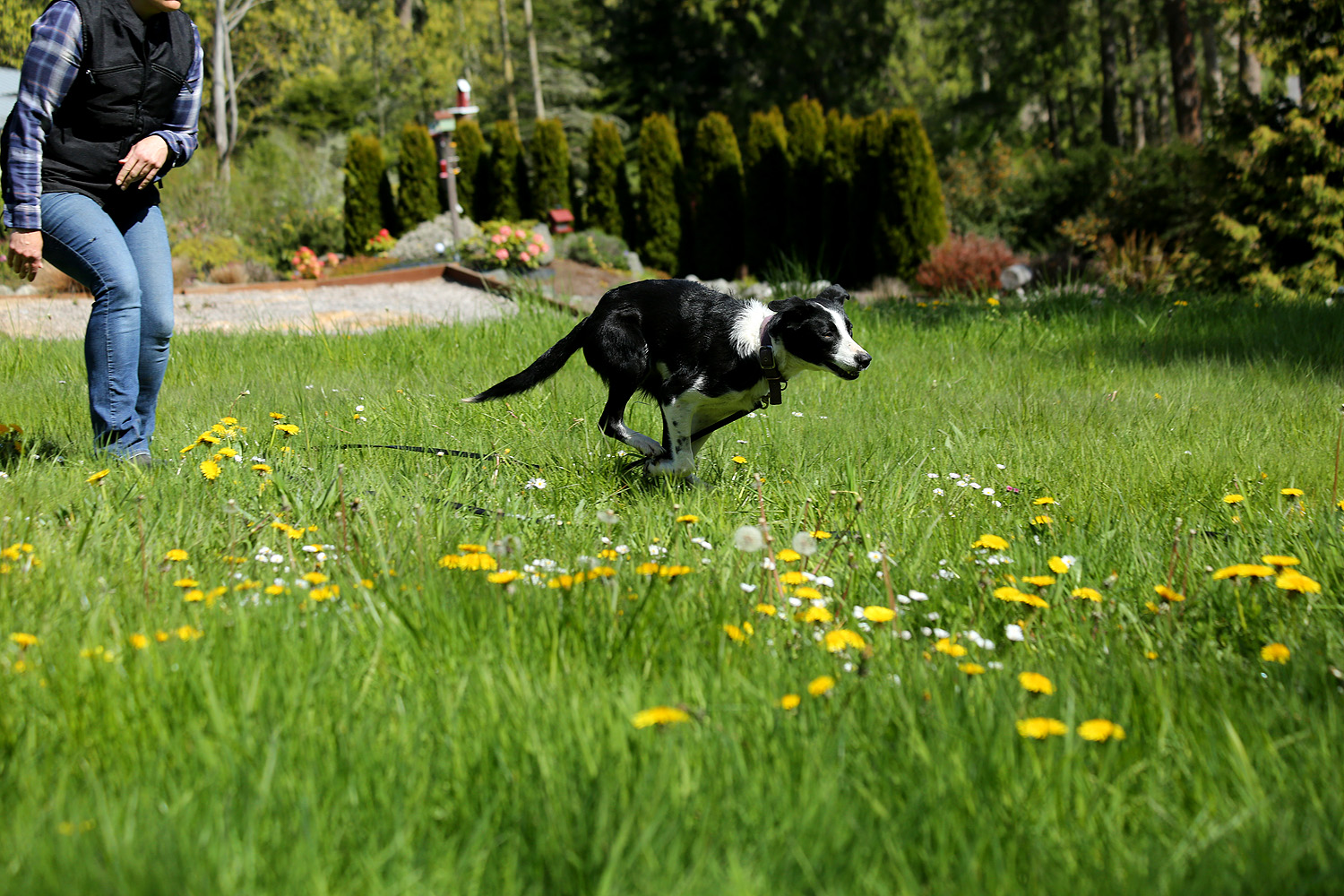 5 Tips to Prevent  Injury While Playing Fetch with Your Dog