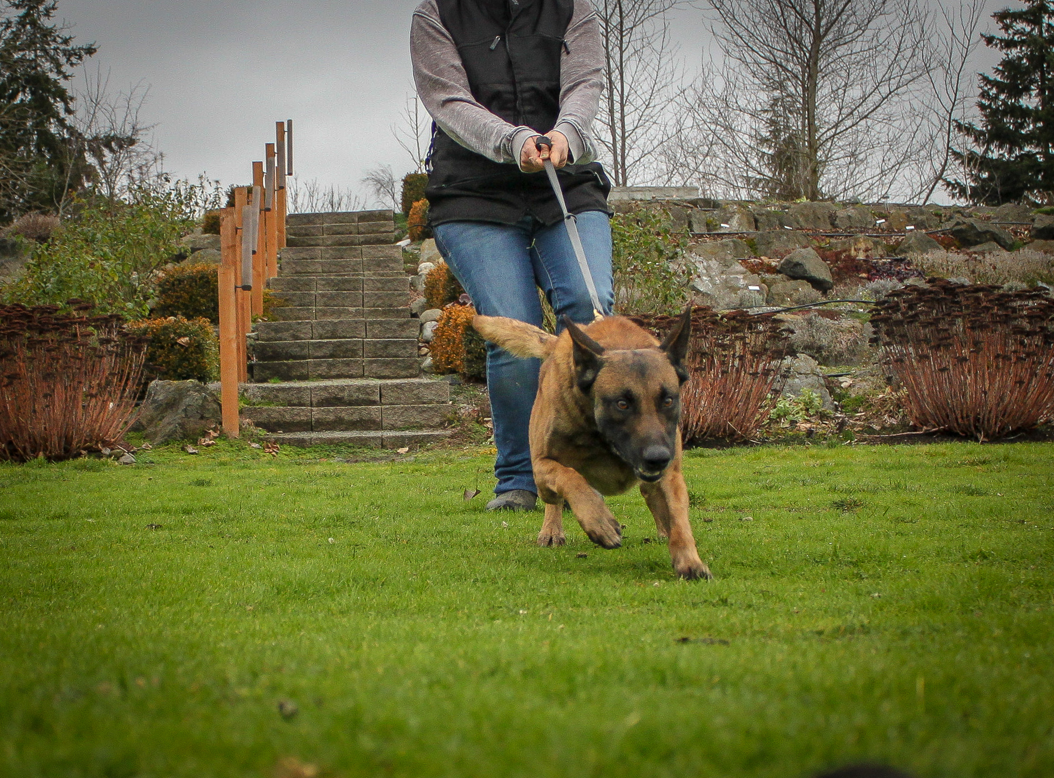 Don't Walk Your Dog: Why we ditch the daily walk to teach Loose Leash Walking