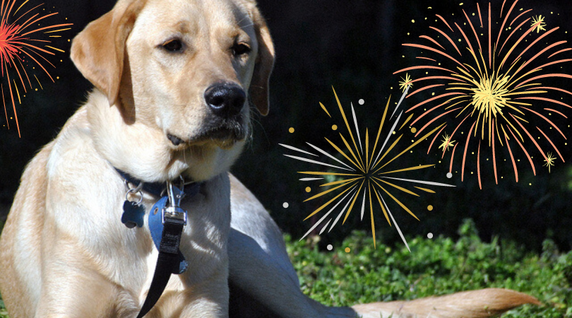 Getting Prepared: Tips for managing your dog's firework anxiety